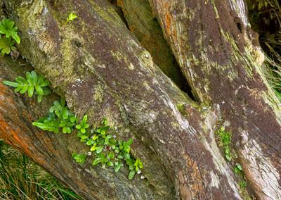 coastal-tree-life_1264