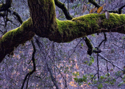 dark-woods_0849
