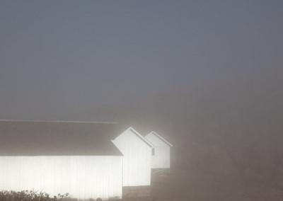 fog-farm_1416