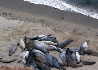 sea-lions_1289