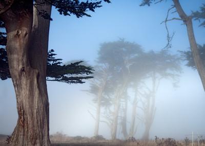 white-fog_1428