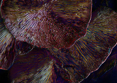 Dark Mushroom Panel 4937 • 40 x 32 inches (102 x 81 cm)